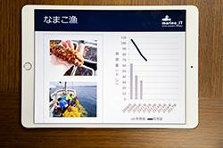 タブレット端末に表示された、なまこの漁獲量のグラフ
